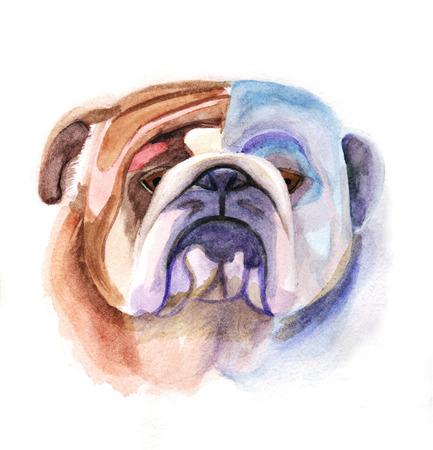 Colored bulldog Stock Photo