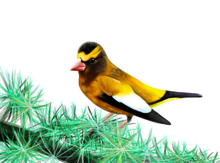 ornithologist: The yellow bird sits on a branch