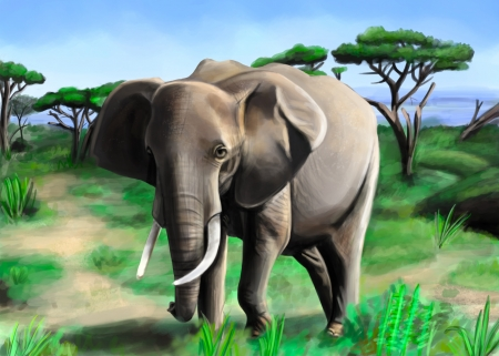 african grey: The african elephant in a wildlife