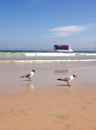 reflective: Seagulls on reflective beach with surf and ad barge in background