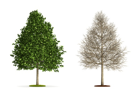 Sweetrum Tree. High resolution 3D illustration isolated on white.