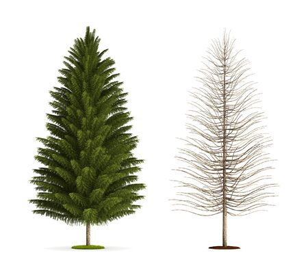 Spruce Tree. High resolution 3D illustration isolated on white. 版權商用圖片