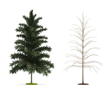 scots: Scots Pine Tree. High resolution 3D illustration isolated on white.