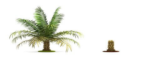 Sugar Palm Tree. High resolution 3D illustration isolated on white.