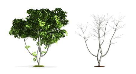 Umbrella Tree. High resolution 3D illustration isolated on white.