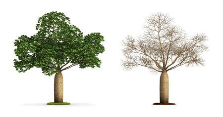 Australian Boab Tree. High resolution 3D illustration isolated on white.