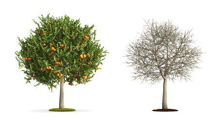 Orange Tree. High resolution 3D illustration isolated on white.