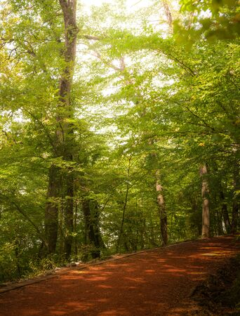 Beautiful forest along the pathway during sunny day