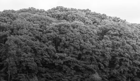 Black and white forest trees over the large hills