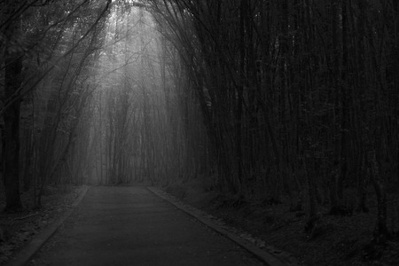 Black and white forest along the pathway and sunshine over the trees. Stock Photo