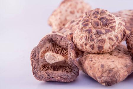 shiitake: mushroom Shiitake Stock Photo