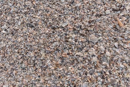 shellfish: shellfish sandy beach and background.