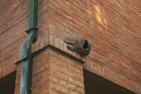 Hornero nest on brick wall building Stock Photo