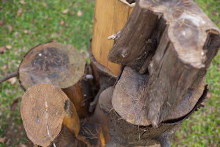 stump seats in the park, Garden furniture made from wooden log Stock Photo