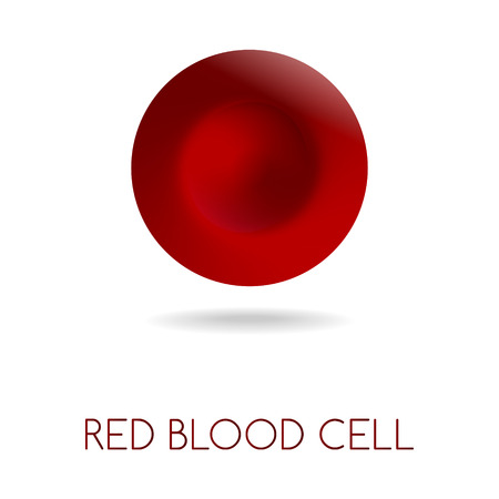 microscopical: Blood red cell vector illustration isolated on white. Illustration