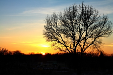 Setting sun with tree without leaves