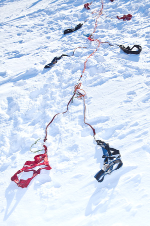 sled dogs: Harness for racing sled dogs lying in the snow