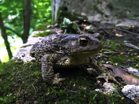 grounding: toad gray grounding ordinary sitting on moss in forest Stock Photo
