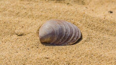 An open shell of a seashell lies on the sand