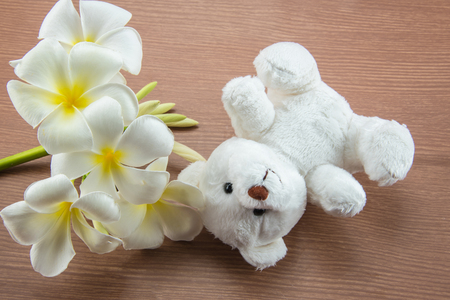 White Teddy Bear toy on a wooden