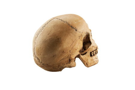 Human skull isolated on white background concept with Halloween