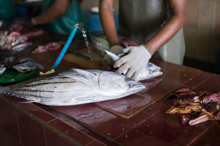 Man cutting yellofin fresh fish at male capital town market,Maldives