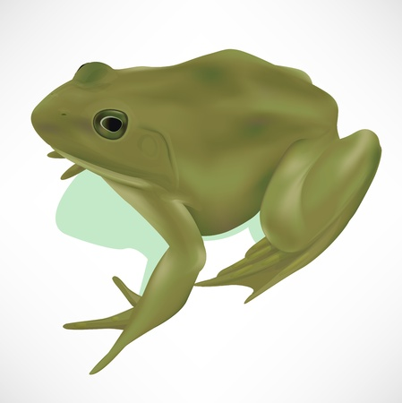 amphibious: Realistic Frog Illustration