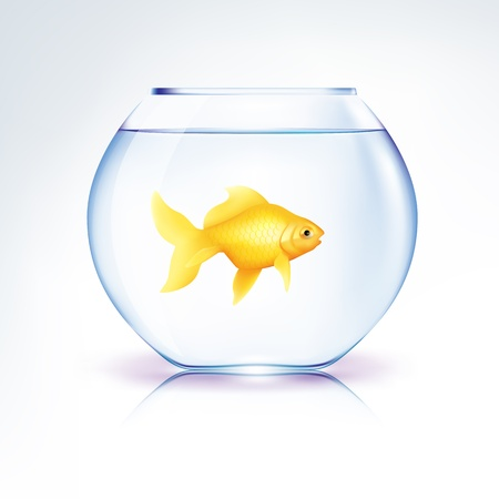 gold fish bowl: Lonely Gold Fish in a bowl