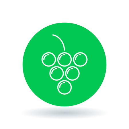 Grapes icon. Grape cluster sign. fruit symbol. White grapes icon on green circle background. illustration.