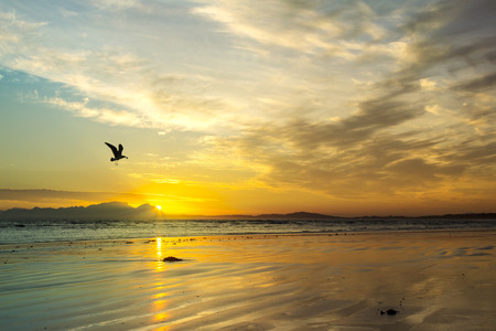 south western: Beautiful beach sunset with flying sea gull silhouette at Strand beach, Helderberg, Cape Town, Western Cape, South Africa.