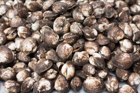 A background of fresh cockles for sale at a market  Stock Photo
