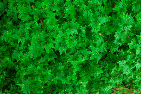 natue: Green leave texture natue background,serenity Stock Photo