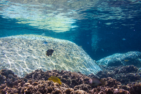 Coral Reef Scene with Tropical Fish in sunlight, shallow sea Stock Photo - 27870725