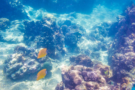 beautiful view of sea life, fish and coral reef Stock Photo - 27870664