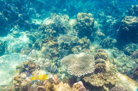 beautiful view of sea life, fish and coral reef photo