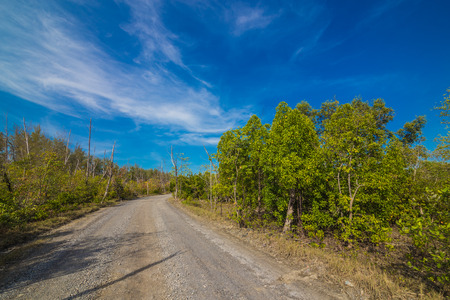 Rural Road track with tree against blue sky photo