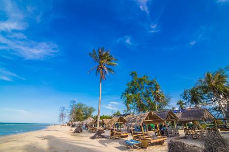 arena blanca: �rbol verde en la playa de arena blanca. palma de coco