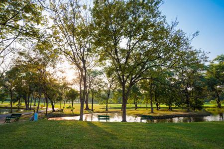 Beautiful green park, Public park with green grass field and tree Standard-Bild