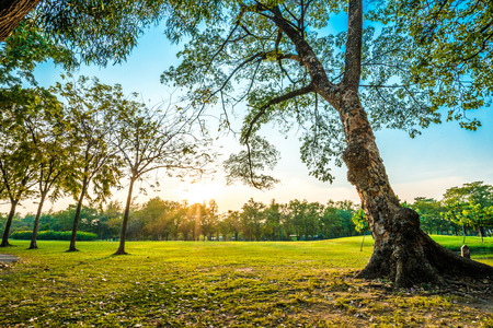 Beautiful green park, Public park with green grass field and tree Stock Photo