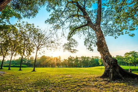 Mooie groene park, Openbaar park met groene gras veld en boom