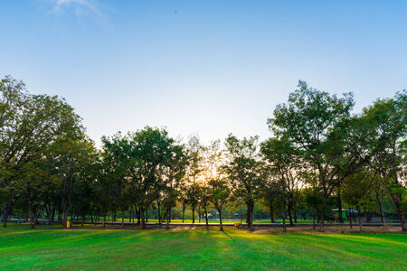 uptown: Green lawn in city park under sunny light, Evening day time