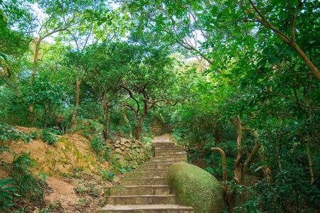 dalmatia: Beautiful scenic hiking trail in the park at Hongkong with green tree