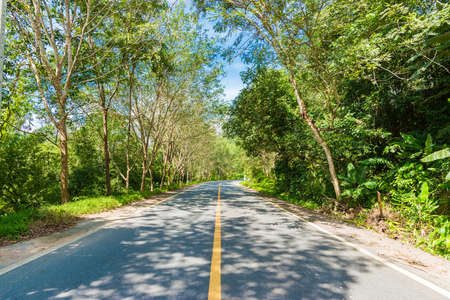 speedway park: Rural road in forest. Blue sky green leaf of tree Stock Photo