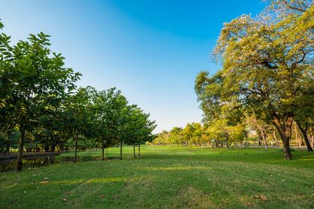 Green grass on public park field, blue sky Archivio Fotografico