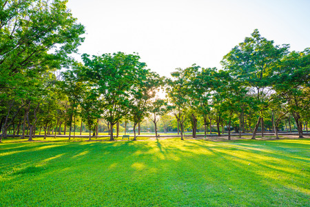 Beautiful green lawn in city park under sunny light at sunset time Standard-Bild