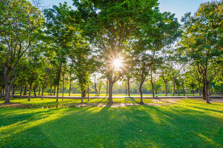 Beautiful green lawn in city park under sunny light at sunset time Stock fotó