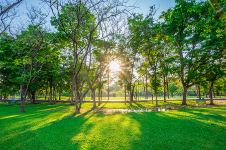 Beautiful green lawn in city park under sunny light at sunset time Stock Photo