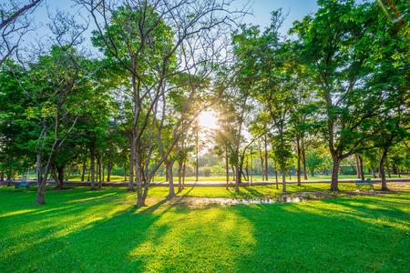 Hermoso césped verde en el parque bajo la luz de sol en la puesta del sol