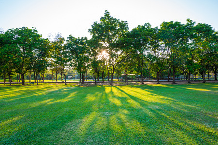 land scape: Beautiful green lawn in city park under sunny light at sunset time Stock Photo