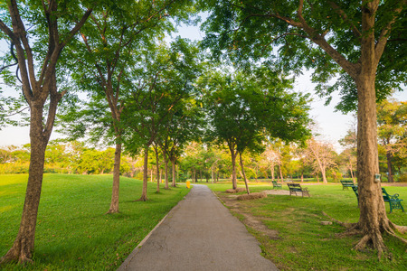 park path: Beautiful avenue in to the park, path way Stock Photo